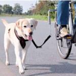Hunde Fahrradleine
