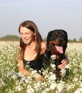 Erziehung Rottweiler - Hundehaltung