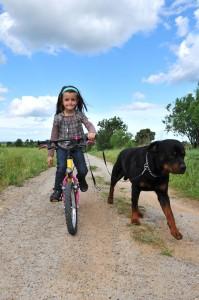 Die Hunderasse Rottweiler braucht viel Bewegung