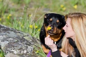 Freundschaft mit dem Rottweiler für ein Hundeleben