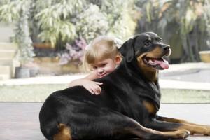 Rottweiler Hunde Sozialisierung