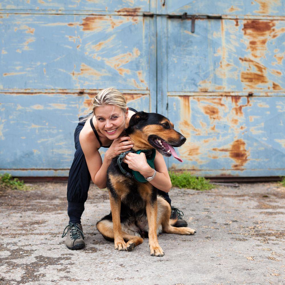 Rottweiler Mix Mischling Mit Schaferhund Bernersennen Labrador
