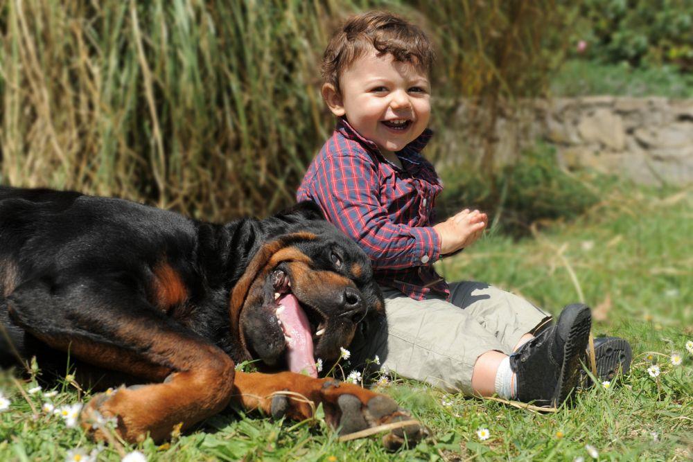 Rottweiler mit Kleinkind
