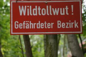Der Rottweiler muss gegen Tollwut geimpft werden