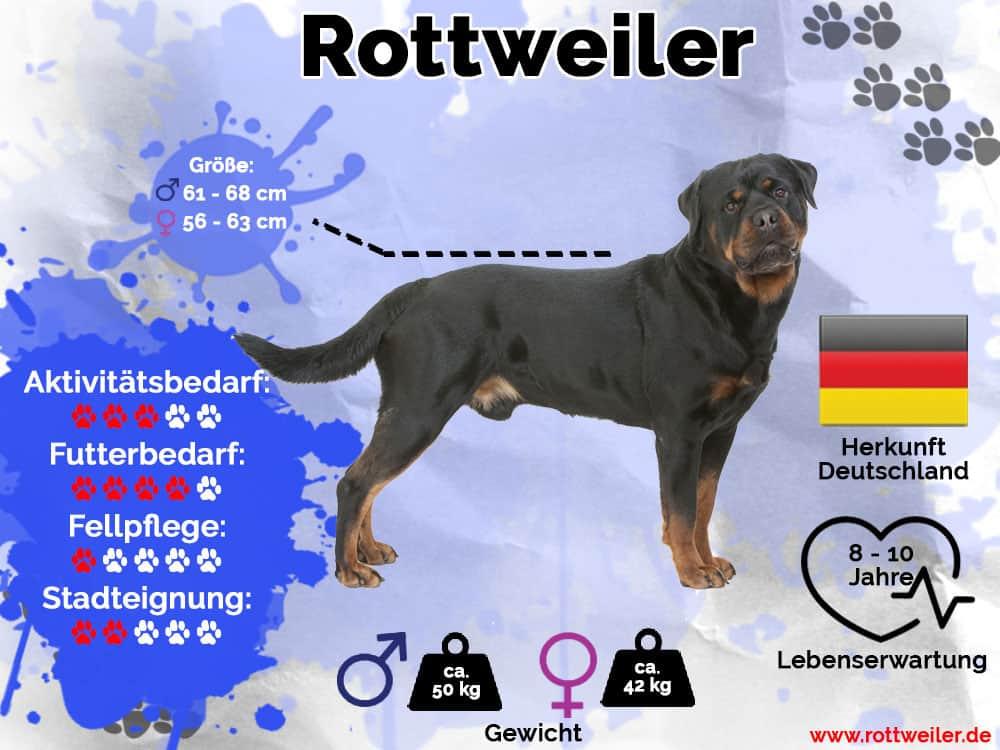 Rottweiler Infografik