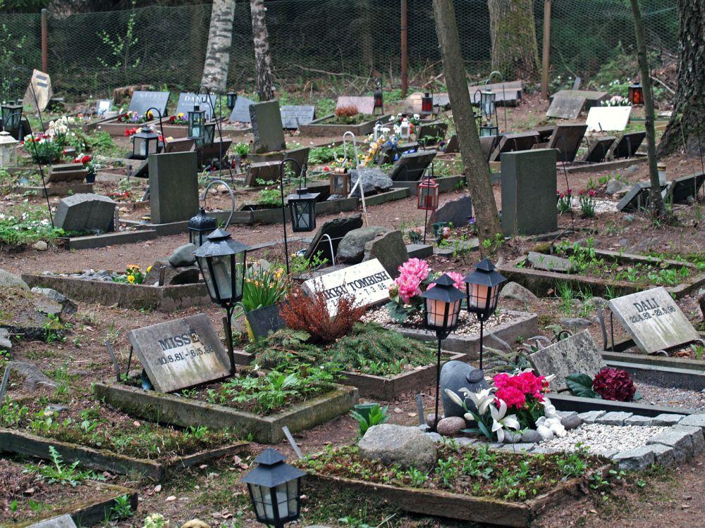 Mein Rottweiler auf dem Tierfriedhof