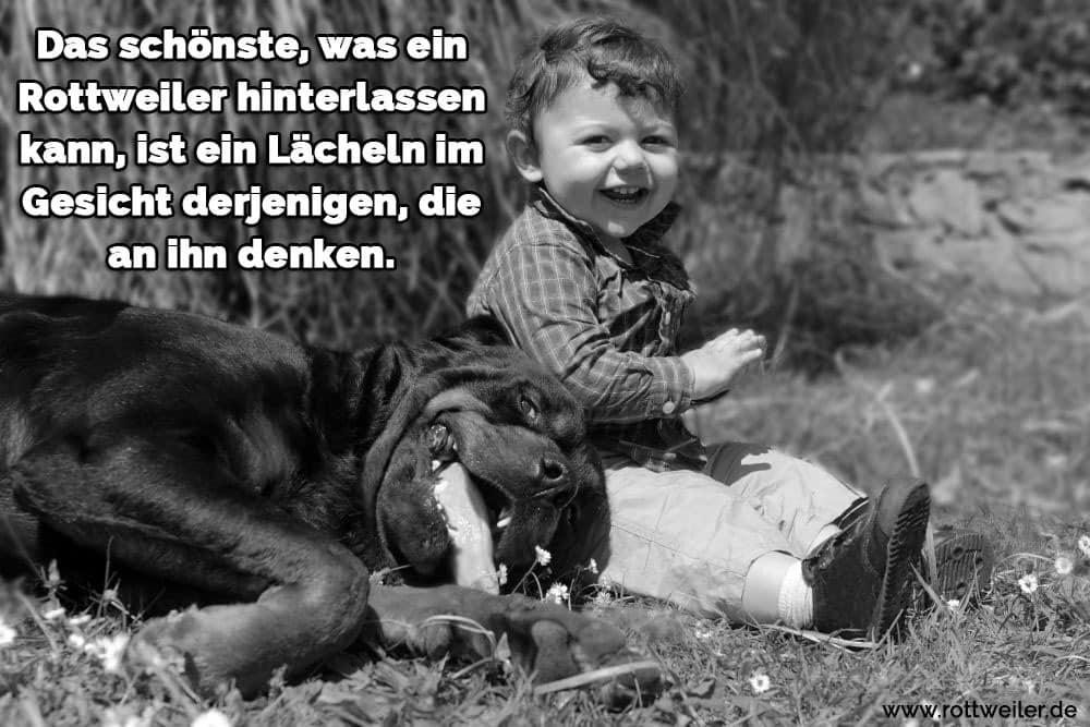 Rottweiler mit Kind im Gras
