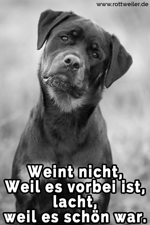 Ein traurig Rottweiler