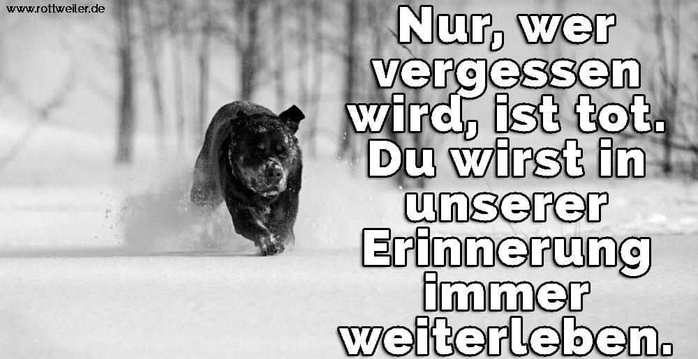 Rottweiler spielt im Schnee