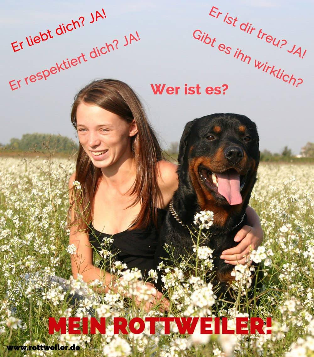 Rottweiler mit Frau in Blumenfeld