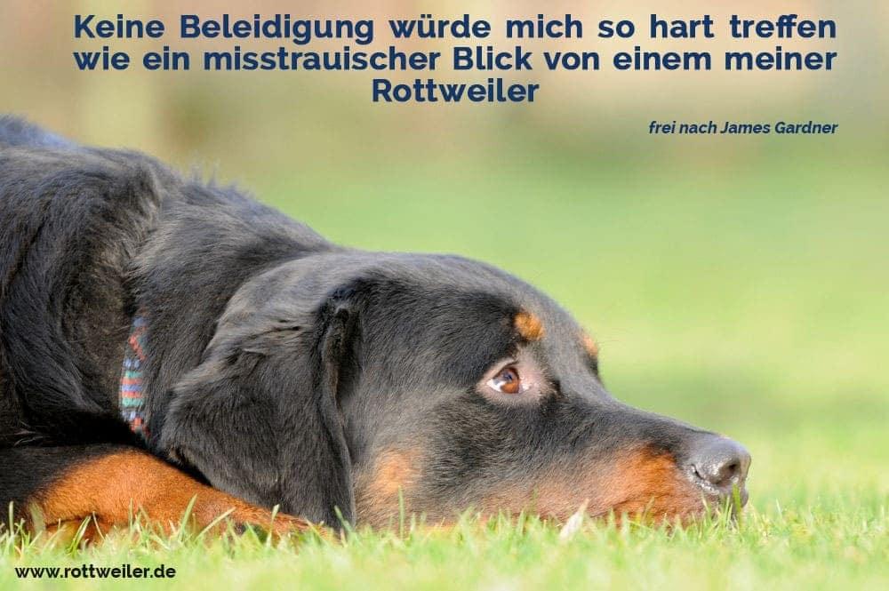 Trauriger Rottweiler