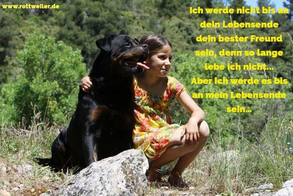 Mädchen und ihr Rottweiler im Sommer