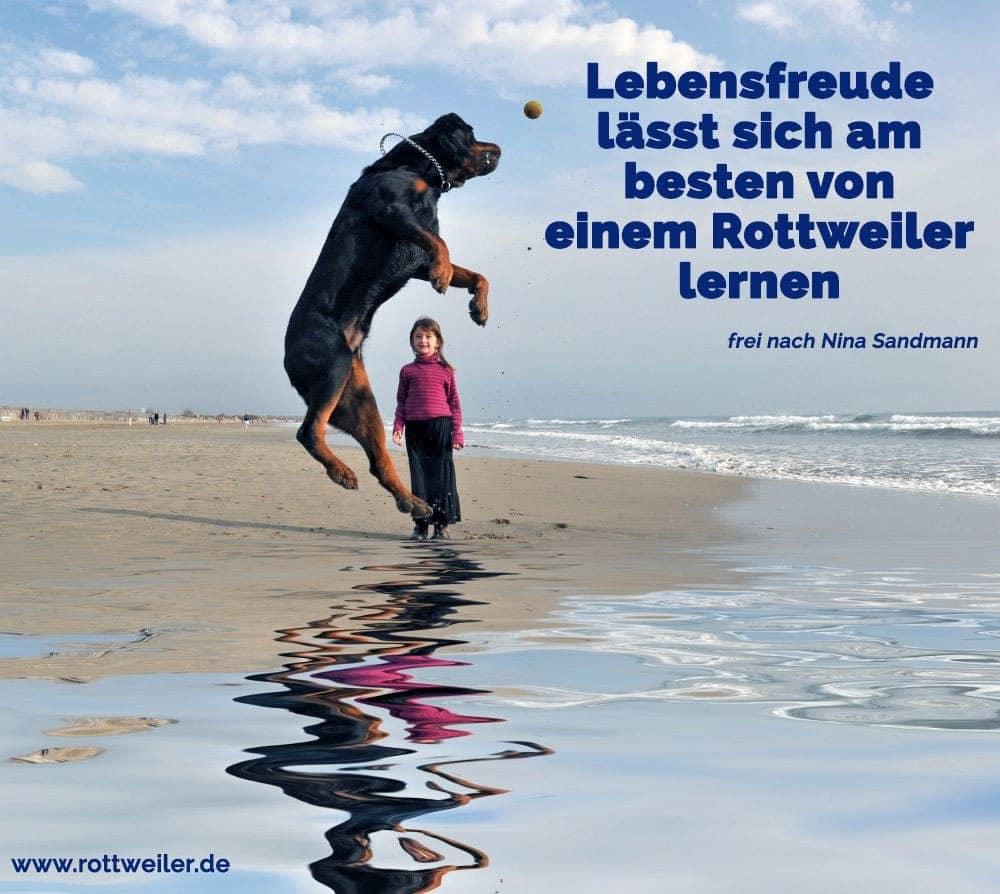 Rottweiler spielt Ball mit Mädchen am Strand