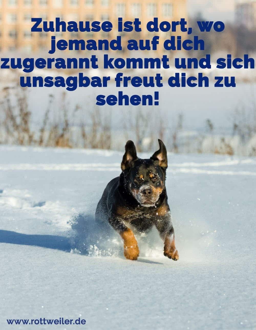 Rottweiler rennt im Schnee