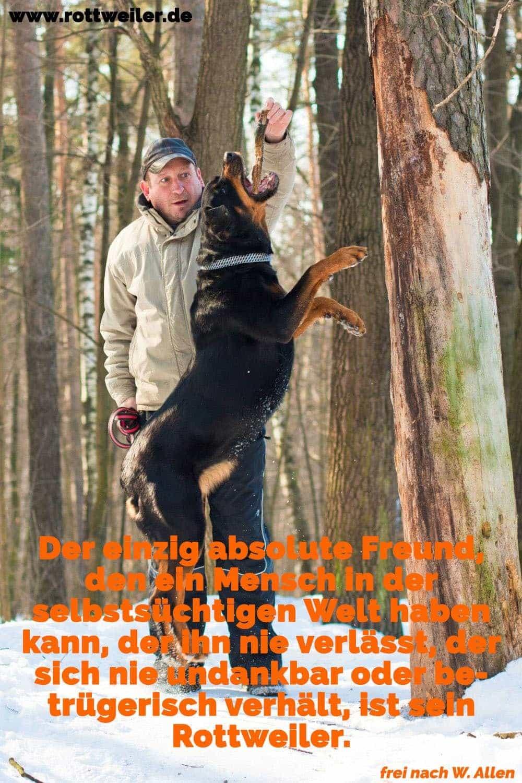 Mann trainiert Rottweiler im Wald, Winter