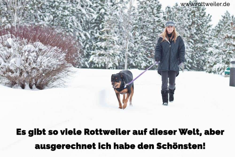 Spaziergang Rottweiler und Frau im Winter