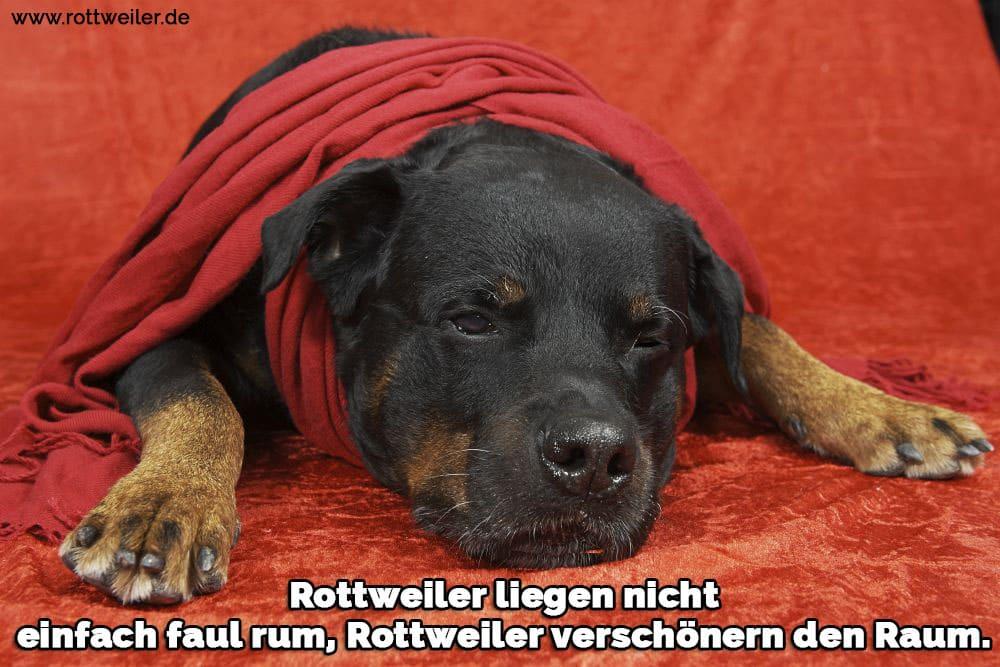 Trauriger Rottweiler unter einer roten Decke