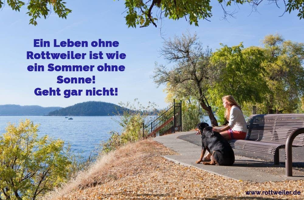 Eine Frau sitzt auf einer Bank mit ihrem treuen Rottweiler, der die Nachmittagssonne und den Blick auf den See genießt.