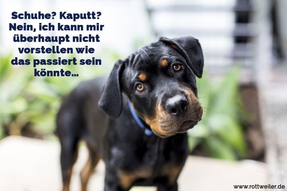 frau wird von hund gefickt