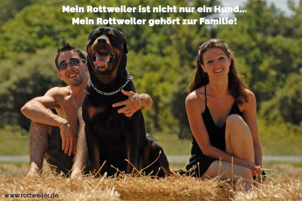 Junges Paar mit einen großem Rottweiler