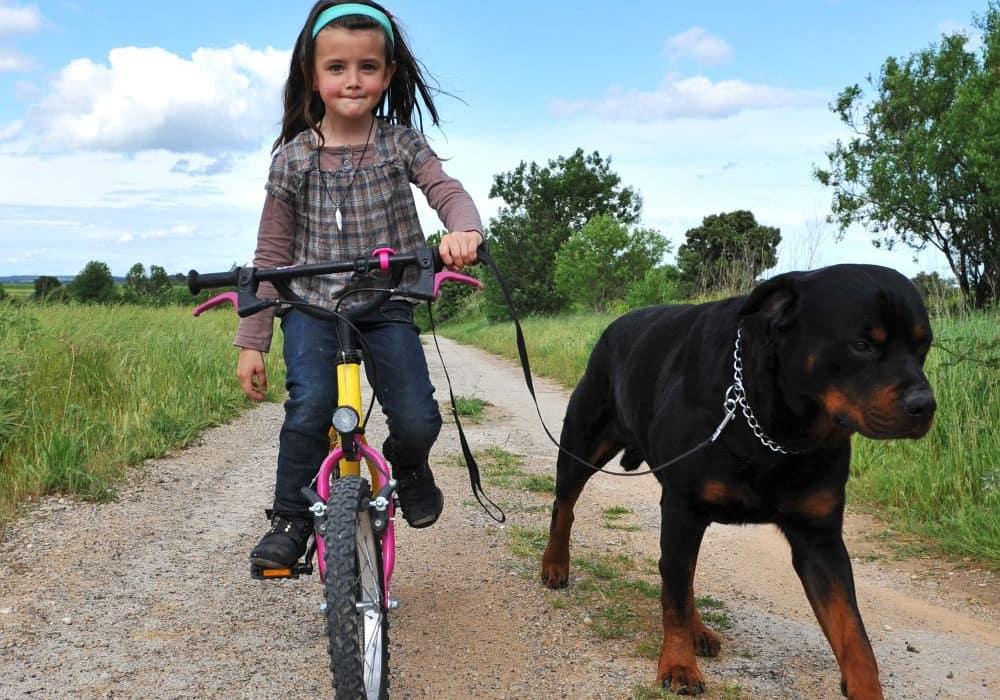 Kleines Kind auf dem Fahrrad mit Rottweiler